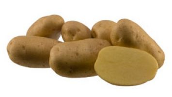 Agria Patates Tohumu