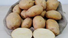 ONARAN 2015 Yerli Patates Tohumu