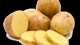 POMGUEEN Patates Tohumu