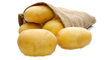 Banba Patates Tohumu