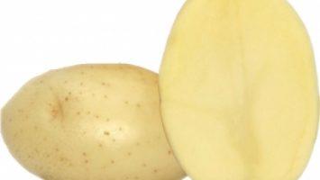 Borwina Patates Tohumu