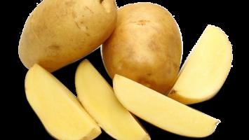 Marfona Patates Tohumu