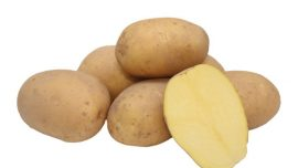 VOGUE Patates Tohumu